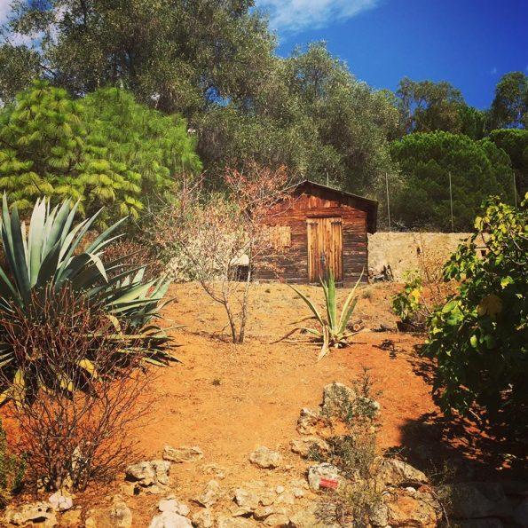 Id e sortie en famille le jardin botanique de nice for Jardin botanique nice