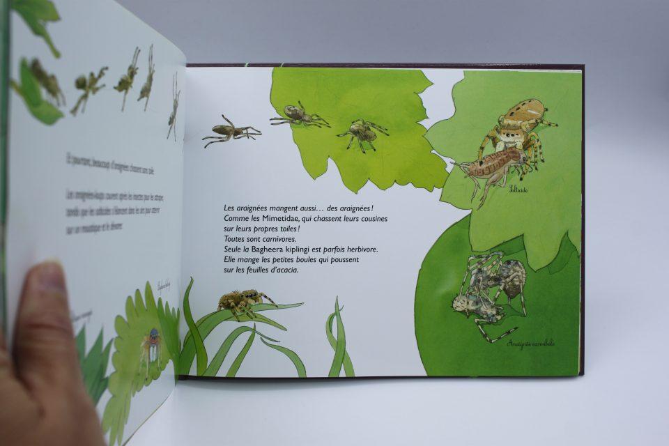 Mystères et toiles d'araignée