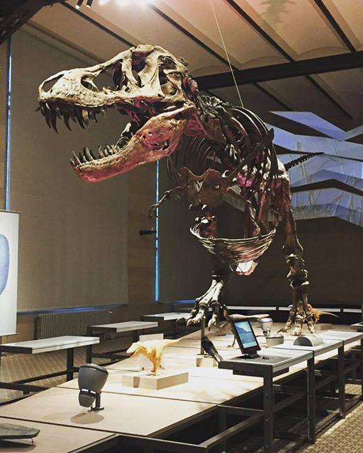 t rex musée des sciences naturelles