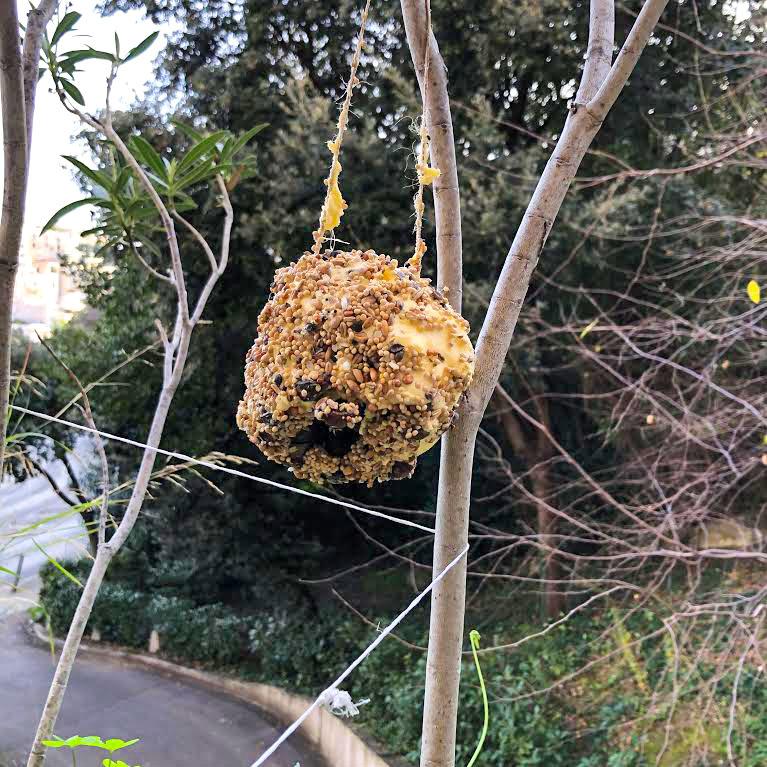 boule de graines pour oiseaux