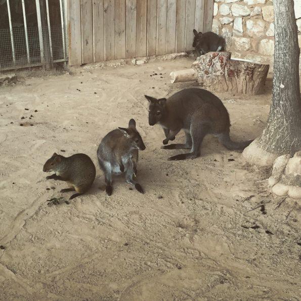 jardin animalier monaco